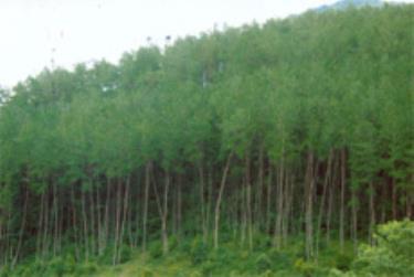 Mục tiêu của dự án là ngăn chặn chặt phá rừng.