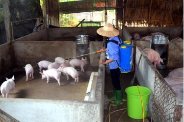 Người chăn nuôi cần quan tâm thực hiện tốt công tác vệ sinh môi trường, tiêu độc khử trùng trong chăn nuôi để chủ động tiêu diệt mầm bệnh, ngăn chặn dịch bệnh gia súc, gia cầm phát sinh và lây lan.