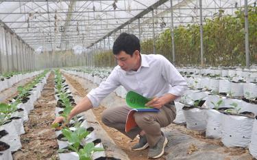 Anh Đinh Xuân Trung thường xuyên kiểm tra và ghi chép để theo dõi sinh trưởng, phát triển các loại rau, củ.