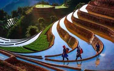 Ruộng bậc thang Mù Cang Chải mùa nước đổ. (Ảnh minh họa - nguồn internet)