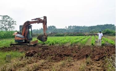 Trưởng thôn Trần Văn Toản trông coi công việc ở đầm Sen. (Ảnh Nguyễn Thơm)