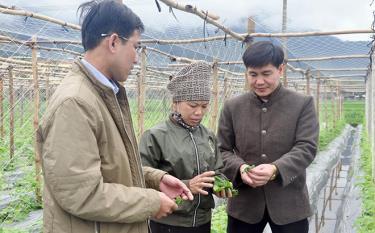 Lãnh đạo xã Thạch Lương, thị xã Nghĩa Lộ kiểm tra tình hình sản xuất nông nghiệp tại cánh đồng thôn Nặm Tọ.