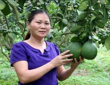 Vườn bưởi da xanh của gia đình chị Hà Thị Oanh mang lại hiệu quả kinh tế cao.