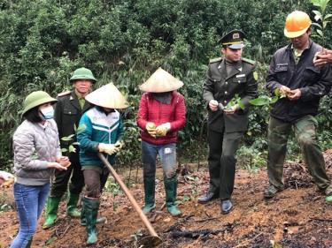 Cán bộ kiểm lâm huyện Trấn Yên hướng dẫn người dân kỹ thuật trồng rừng vụ xuân.