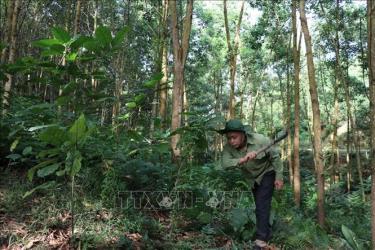 Người dân Yên Bái chăm sóc rừng.