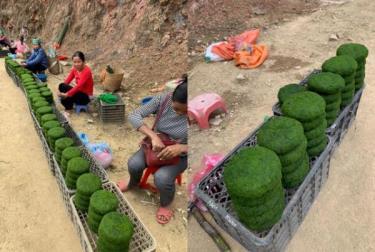 Những tảng rêu tròn trịa, chắc nịch với màu xanh bắt mắt được bà con bày bán tại các khu chợ cóc ven đường thu hút sự chú ý của du khách.