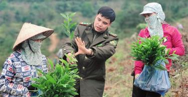 Cán bộ Trạm Kiểm lâm Suối Xuân, Hạt Kiểm lâm Văn Chấn hướng dẫn người dân trồng rừng vụ xuân 2021.