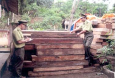 Cán bộ Đội Kiểm lâm cơ động tỉnh đo gỗ tịch thu. (Ảnh: T.P)