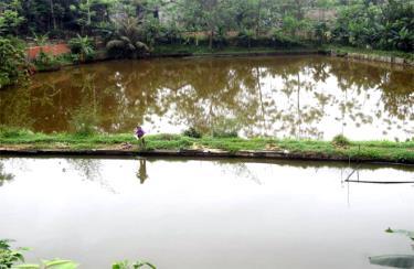 Mỗi năm, gia đình anh Đoàn Văn Khánh có lãi khoảng 200 triệu đồng từ nuôi cá.