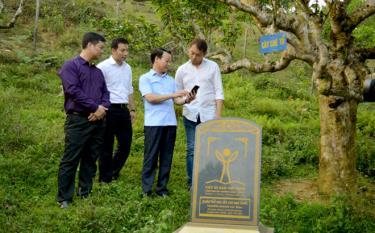 Chủ tịch UBND tỉnh Đỗ Đức Duy hướng dẫn Đoàn công tác tham quan vùng chè Suối Giàng