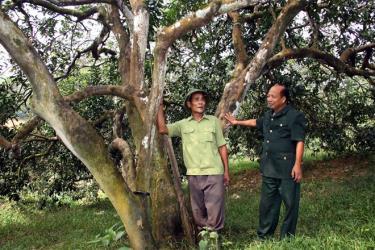 Ông Phúc (bên trái) trao đổi với Chủ tịch Hội CCB xã Hán Đà kinh nghiệm trồng bưởi.