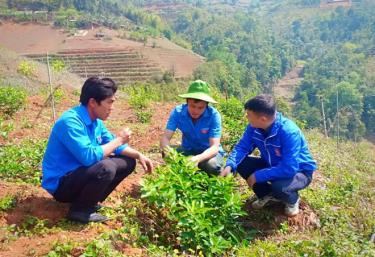 Hờ A Dì (giữa) chia sẻ kỹ thuật trồng chanh không hạt với cán bộ Đoàn xã.