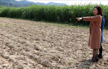 Đoàn viên Đới Thị Vân Anh - Giám đốc Hợp tác xã Nông nghiệp Tây Bắc tham quan mô hình trồng ngô ngọt tại xã An Thịnh.