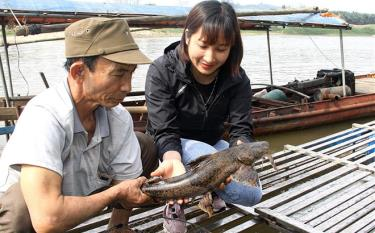 Từ nuôi cá chiên, hàng năm bà Nguyễn Thị Lan ở tổ 6, thị trấn Mậu A có thu nhập trên 100 triệu đồng.