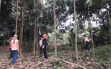 Nhờ đầu tư chăm sóc hiệu quả, tổng thu nhập từ phát triển kinh tế rừng năm 2019 của xã Tân Đồng đạt 53 tỷ đồng.
