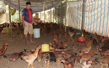 Mô hình nuôi gà của ông Kiềng Kim Cương ở thôn Yên Thịnh mang lại hiệu quả kinh tế cao.