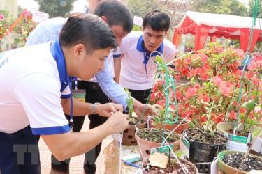 Nhiều người chơi lan trao đổi kinh nghiệm trồng lan.