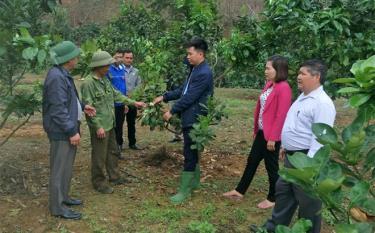 Lãnh đạo xã Châu Quế Thượng kiểm tra mô hình trồng cây ăn quả có múi tại thôn Ngòi Lẫu.