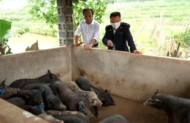 Mô hình chăn nuôi lợn sinh sản giống bản địa ở xã Minh An, huyện Văn Chấn bước đầu cho thấy sự phù hợp với điều kiện thực tế địa phương.