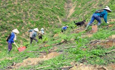 Làm tốt công tác phát triển trồng rừng thay thế và bảo vệ rừng, phủ xanh đất trống, đồi núi trọc góp phần phòng chống lũ quét và sạt lở đất.
