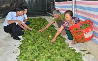 Lãnh đạo xã Báo Đáp nắm bắt tình hình sản xuất tại một mô hình nuôi tằm ở thôn Đồng Sâm.