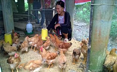 Nhiều hộ đồng bào dân tộc thiểu số trong tỉnh đã áp dụng hình thức chăn nuôi trên đệm lót, góp phần bảo vệ môi trường.