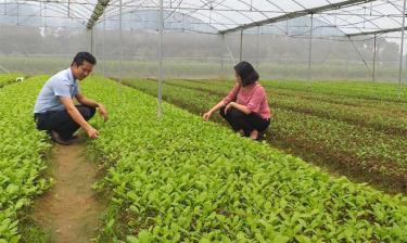 Yên Bái đã có nhiều cơ chế khuyến khích phát triển sản xuất lương thực, thực phẩm sạch, an toàn.