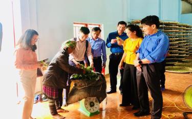 Liên minh HTX Việt Nam, Liên minh HTX tỉnh Yên Bái và Tổ chức Lao động quốc tế (ILO) thăm và làm việc với HTX Suối Giàng, huyện Văn Chấn - mô hình HTX đang hoạt động hiệu quả trên địa bàn tỉnh Yên Bái.