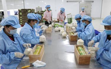 Chế biến dừa xuất khẩu tại nhà máy đóng gói Công ty Vina T&T Group, huyện Châu Thành (Bến Tre).