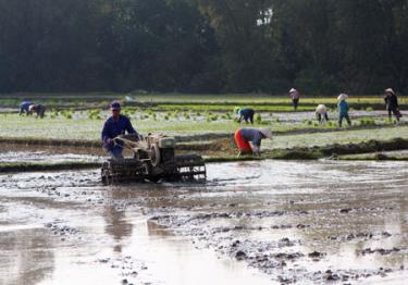 Nông dân huyện Văn Chấn đưa cơ giới vào đồng ruộng làm đất gieo cấy vụ mùa.