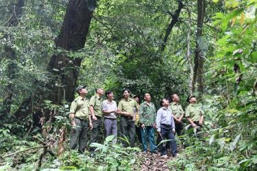 Cán bộ Hạt Kiểm lâm huyện Văn Yên phối hợp với cán bộ và người dân xã Nà Hẩu tuần tra, bảo vệ rừng nguyên sinh.