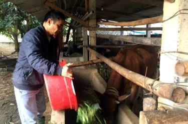 Chăn nuôi đại gia súc là một trong những thế mạnh của xã Lâm Giang.