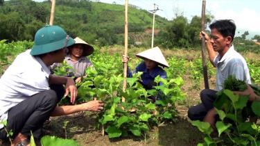 Nhân dân xã Bình Thuận bê tông hóa đường giao thông nông thôn.