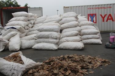 8,3 tấn vảy tê tê được vận chuyển từ châu Phi về cảng Hải Phòng.