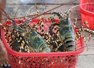Tôm hùm, tôm sú, cá tra... đang được ưa chuộng tại Trung Quốc.