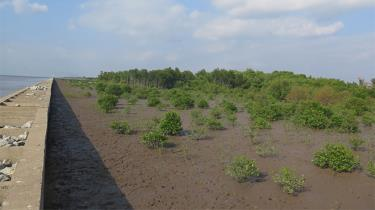 Rừng ngập mặn tại Cà Mau.