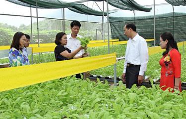Đồng chí Nguyễn Thế Phước - Bí thư Huyện ủy Trấn Yên cùng đoàn công tác thăm mô hình rau sạch tại thành phố Yên Bái.