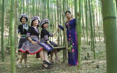 Rừng vầu trúc tại bản Háng Sung, xã Mồ Dề đang là một trong những địa điểm đẹp, thu hút du khách.