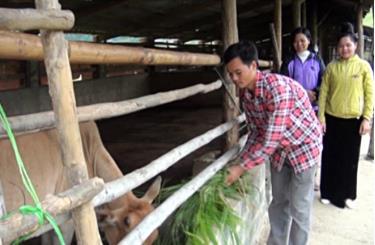 Gia đình anh Hoàng Đình Văn phát triển chăn nuôi gia súc, mang lại thu nhập cao.