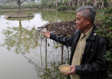 Thương binh Đỗ Trọng Thủy chăm sóc ao cá.