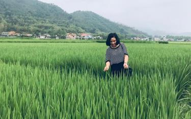 Giám đốc Phạm Thị Đông thăm cánh đồng cấy lúa Séng cù ở Mường Lò.
