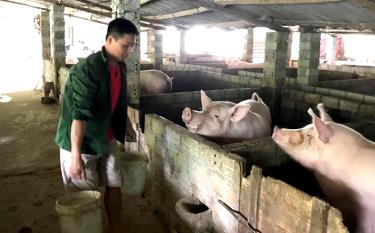 Ban hành một số chính sách đặc thù hỗ trợ sản xuất nông nghiệp năm 2020 để ứng phó với dịch bệnh Covid - 19 sẽ thúc đẩy chăn nuôi phát triển.