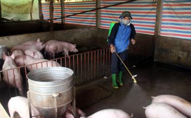 Người dân cần chủ động nắm bắt tình hình dịch tả lợn châu Phi và tích cực  phun tiêu độc khử trùng chuồng trại để phòng chống dịch bệnh