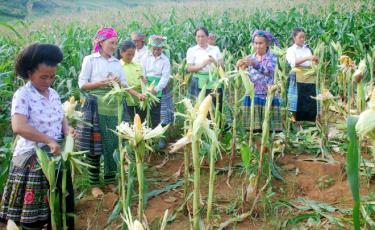 Nhờ được hưởng các chính sách ưu đãi của Nhà nước, người dân huyện Trạm Tấu đã mạnh dạn đưa các loại cây, con, giống mới vào sản xuất, góp phần xóa đói giảm nghèo.