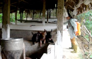Người chăn nuôi tăng cường phun tiêu độc khử trùng phòng chống dịch tả lợn châu Phi.