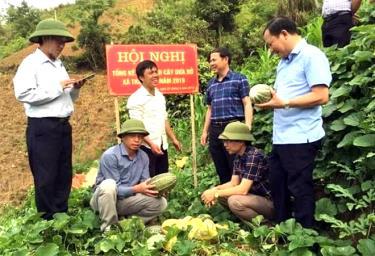 Lãnh đạo huyện Trạm Tấu thăm mô hình trồng dưa tại xã Trạm Tấu.
