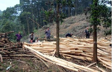 Kinh tế rừng là hướng đi đúng, góp phần mang lại ấm no cho nhân dân Lục Yên.