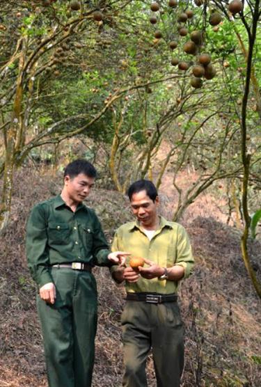 Lãnh đạo Hội CCB xã Khánh Hòa thăm mô hình trồng cam sành của gia đình cựu chiến binh Nguyễn Thanh Sơn ở thôn Làng Khương.