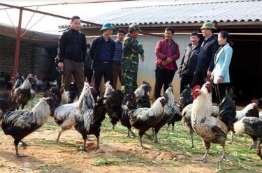 Lãnh đạo huyện Mù Cang Chải thăm khu trang trại chăn nuôi gà đen.