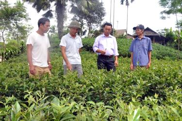 Đảng viên Hà Văn Đông, thôn Trực Thanh (thứ 2 bên trái) với mô hình trồng chè theo tiêu chuẩn VietGAP có thu nhập khá.